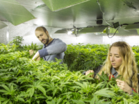 UK's first medical cannabis investor floats in London