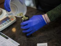 More Than 200 Apply For Adult-Use Marijuana Business Licenses On 1st Day