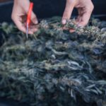 To Touch the Plant or Not: What Type of Cannabis Business Should You Start?