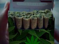 10 Reasons Marijuana Should Be Legalized Worldwide