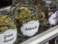 U.S. Cannabis Businesses Look Northward as Canada Opens a Vast Legal Marijuana Market