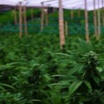 Marijuana Stocks Newsletter – Thursday August 16, 2018