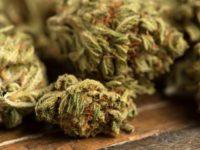 Marijuana Stocks Newsletter – Wednesday August 15, 2018