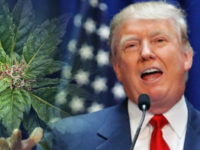 Donald Trump Stands In Support For Federal Marijuana Reform