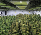 Profile Solutions Inc (OTCMKTS:PSIQ) Gets Preliminary Approval to Establish A Growing Farm/ Processing Plant for Medical Cannabis in The Kingdom of eSwatini