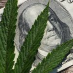 Marijuana Stocks Newsletter – November 20, 2018