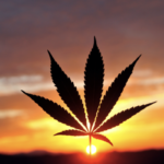 Mexico's incoming government moves to legalize marijuana
