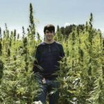 Deadline nears for hemp-farming applications