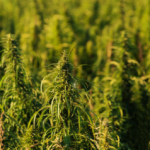 Hempco Food and Fiber Inc. Announces Five-Prong Strategy to Accelerate Growth and Support the Canadian Hemp Industry