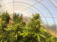 Aurora Cannabis Prices Offering of Convertible Senior Notes