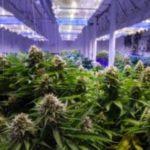 Marijuana Stocks Newsletter – Tuesday, January 22, 2019