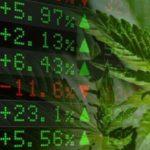 Marijuana Stock Market Continues to Mature