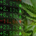 Analysts are Rating These Marijuana Stocks as Buys