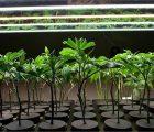 Harvest One Cannabis Inc (OTCMKTS:HRVOF) Debuts Reformulated Satipharm CBD Capsules In Europe
