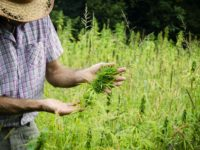 Farmers to FDA: Only CBD From American-Grown Hemp Is Legal