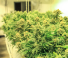 Neptune Wellness Solutions Inc (NASDAQ:NEPT) And Green Organic Dutchman Holdings Ltd (OTCMKTS:TGODF) Strike Multi-year Packaging And Formulation Deal