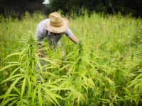 How You Can Start Making Money From Hemp