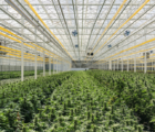 Aleafia Health Inc (OTCMKTS:ALEAF) Provides Updates Regarding Stolen Recreational Cannabis Consignment