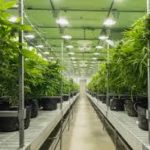 Cresco Labs Inc (OTCMKTS:CRLBF) Completes Takeover Of Hope Heal Health Inc: Launches The Sale Of Recreational Cannabis At Hope Heal Health Dispensary