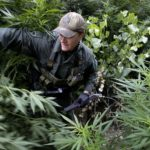 Governors Across U.S. Step Up Push To Legalize Marijuana In Their States
