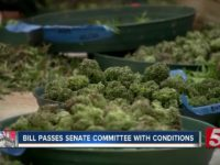 Medical marijuana bill passes through Tennessee Senate committee, conditions attached