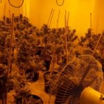 Inside a cannabis farm discovered by police worth £100k