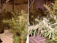 Eastwood Cannabis