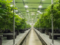 Cresco Labs Inc. (OTCMKTS:CRLBF) Reports 197% Revenue Growth in FY2019 and 144% In Q4
