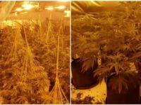 £600k cannabis factory found in ex-Lloyds Bank branch in Brierley Hill
