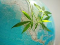 Legal implications of recommending cannabis