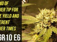 UCG's Medical Cannabis Garden 2.0