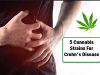 Marijuana Strains for Crohn's Disease?