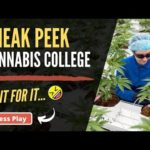 Sneak Peek inside Cannabis College - Learn Sativa University