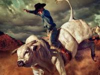 The Cannabis Bull Gets Back into Gear (PLNHF, SGMD, TCNNF, CRLBF)