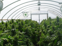 North Springfield property gets marijuana product manufacturing license