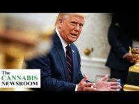 Trump Comments on Marijuana, Border Patrol Seizes Illicit Cargo, and New Zealand Accepts Licenses