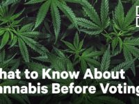 2020 Election Cheat Sheet: Cannabis | NowThis
