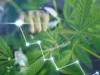Are These The Best Pot Stocks For Your December Watchlist