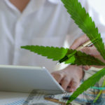 Which Of These 2 Cannabis Stocks Is A Better Investment?