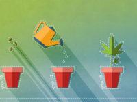 Cannabis Growing Manual