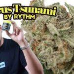 "Kush Mountains ""Mini Buds"" by Rythm (Cannabis review)"