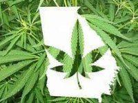 Companies to receive medical marijuana production licenses in Georgia announced